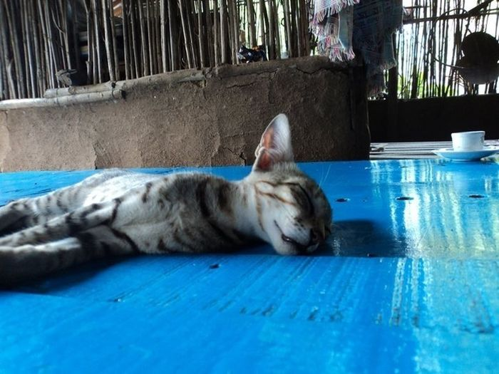 Sleeping Kitty My Clicks