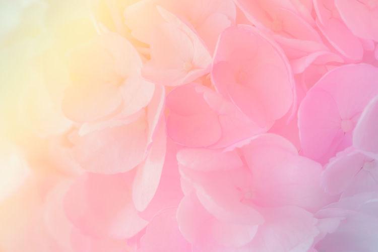 Hydrangea with