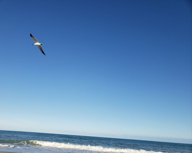 Take these wings and learn to fly Ocean View Sand Florida Life Sea Bird Of Prey Full Length Wave