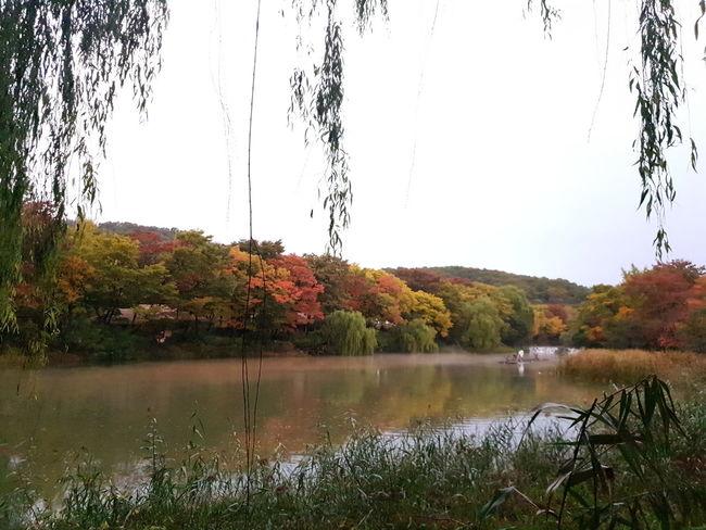 민속촌 Tree Water Autumn Lake Reflection Change Sky Grass Reflection Lake