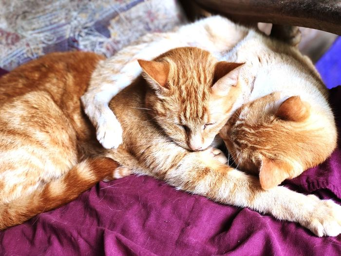 Pink Color One Animal Pets Domestic Mammal Animal Animal Themes Domestic Animals Relaxation Sleeping Vertebrate Domestic Cat Bed Cat Feline Resting Eyes Closed  Indoors  Close-up Furniture No People