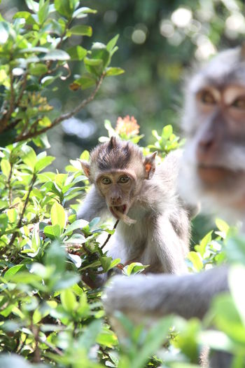 Portrait Baboon Tree Young Animal Cute Close-up Plant