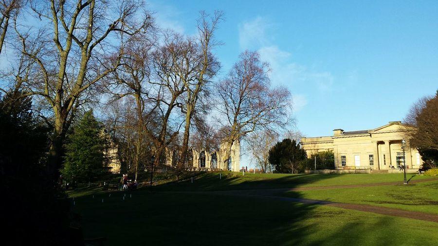 Trees Cloud -