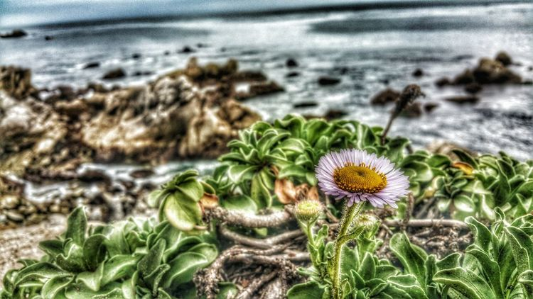 One lonely flower... Color Photography Camera Love Photography Is Life Photo Art Beautiful Clouds And Sky Photo Of The Day Photography Lovers Waterscape EyeEm Best Shots