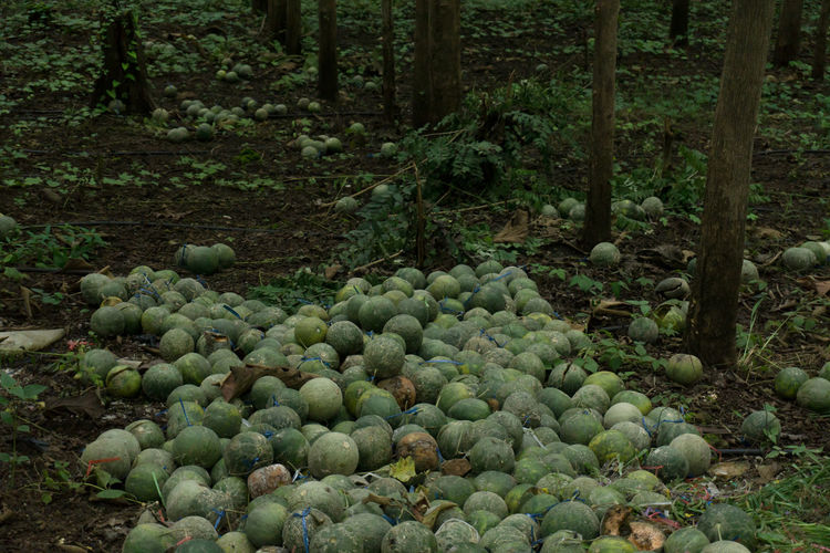 Melons Food Forest Fruit Nature Outdoors