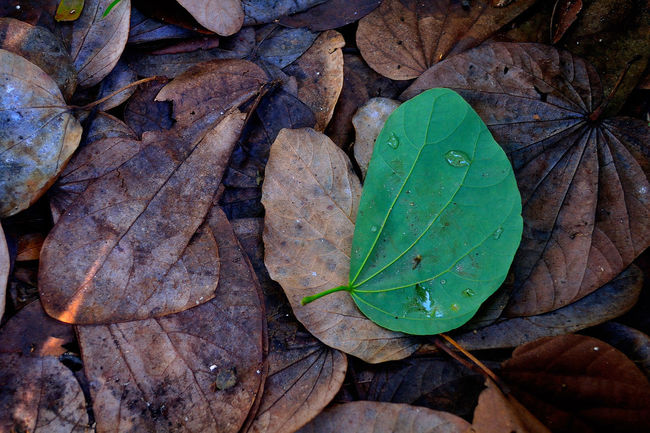 In the midst of decay.. Leaf Backgrounds Nature Oddmanout Outdoors Close-up Leaves🌿 Tree Fresh Rot Decay Contrast Streetphotography