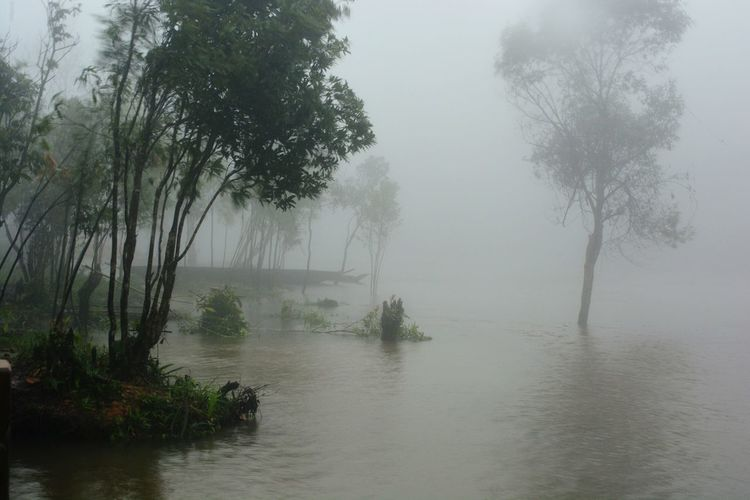 Fog Tree Nature Water Morning Outdoors Lake Beauty In Nature Landscape Scenics Tranquility No People Rural Scene