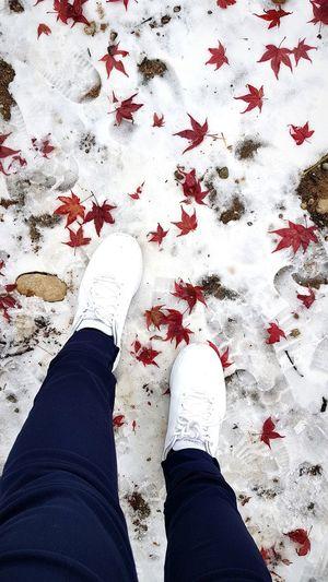 Winter walk Nami Island ñami Korea Korea2017 Kotd SkechersPH Shoes Winter Snow Nature Nature Photography White