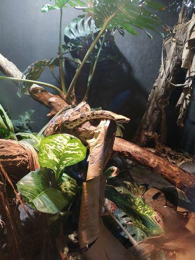 Water Reptile