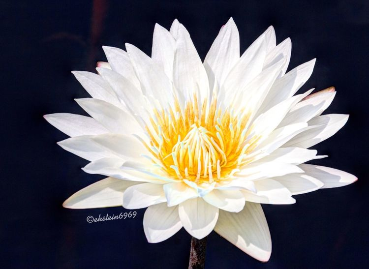 EyeEm Best Shots - Nature Flowers Flowerporn