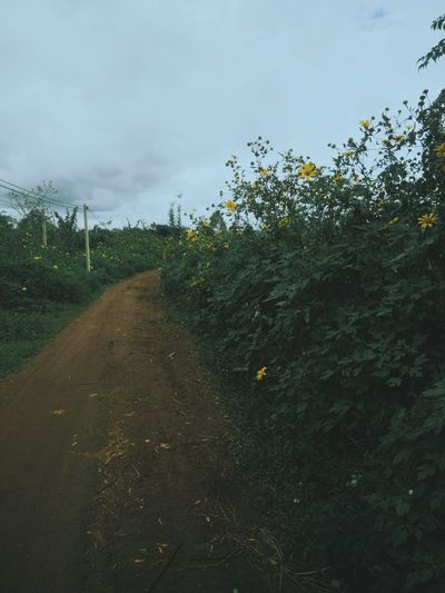 way with green of plant. Plant Growth The Way Forward Nature Direction No People Land Day Landscape Tree Outdoors Trail Long Tranquility Footpath Diminishing Perspective Tranquil Scene Flower Green Color Way Sky Mobilephotography VSCO Vscocam Vscoasia