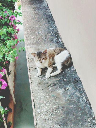 Taking Photos Cat Cat Lovers Cat♡