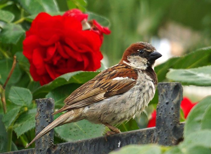 Close-up of bird perching on red flower