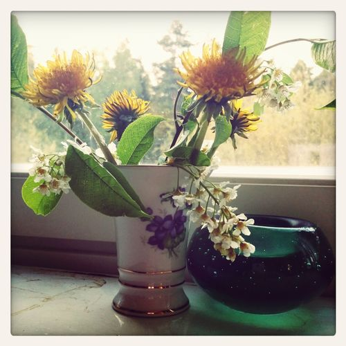 Yesterday just before leaving my friend's house to head home, her youngest came in and handed me this bouquet. After thanking her, we realised that she had a puzzled look on her face and asked her who they were for. Her reply, 'Duh. The Cuban'. Her LOVES them. Summersweetness Schooledbya10yo