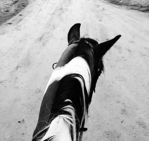 RideForOlivia MaximDiána🐴 Hisztiskanca Painthorse Horse Mare