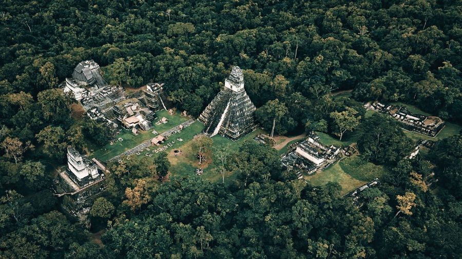 High angle view of trees and archeological pyramids in guatemala