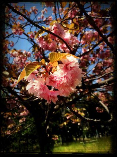 Spring. Flower. Nature