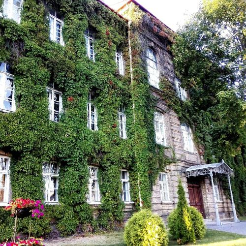 Architecture Built Structure Building Exterior Plant Outdoors No People Green Color Low Angle View старинныйдом Architectural Feature Tree Growth Creeper Plant
