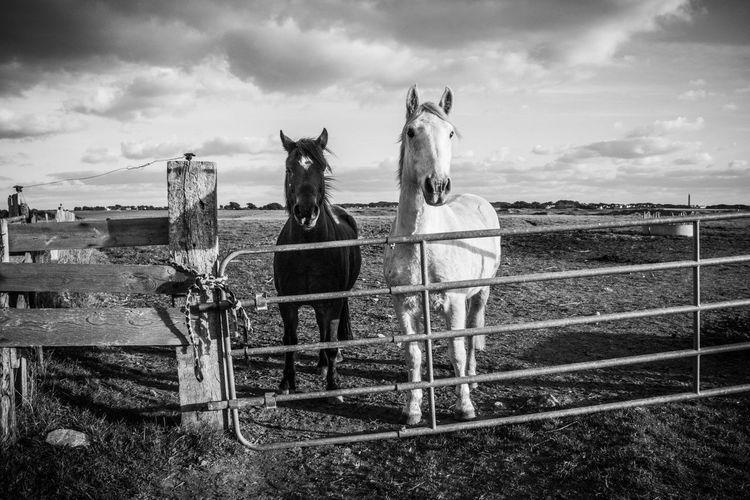 Horse cart on field against sky