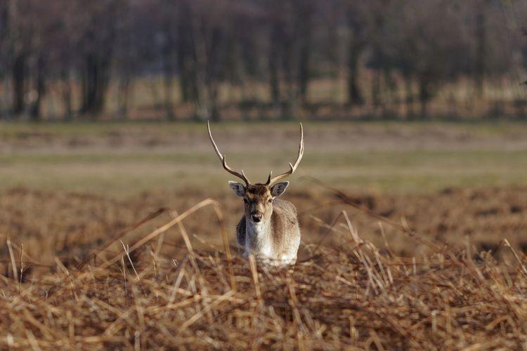 Buck One Animal Land Field Animal Wildlife Animals In The Wild Animal Plant Deer
