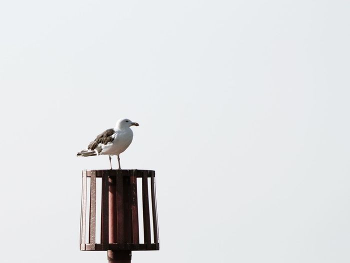 Sky Empty Space Photography Photooftheday Perching Mourning Dove Bird Of Prey Stork Copy Space Sky Sea Bird Seagull