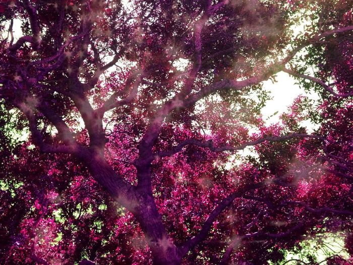 Dreamy Tree
