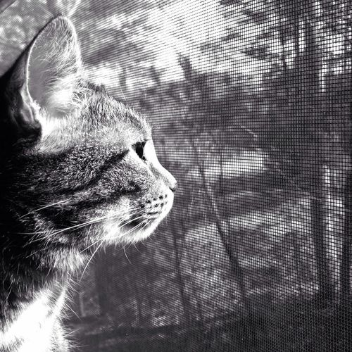 Weedle enjoying the morning sun Cat Blackandwhite IPhoneography Iphoneonly