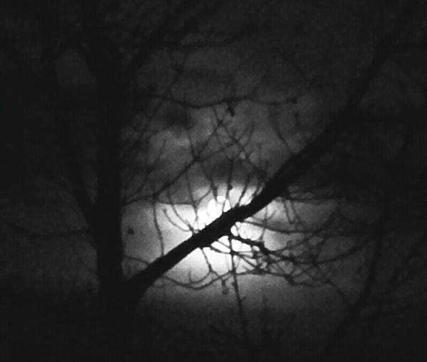 Full moon with dramatic clouds... hiding behind the tree... soo bright, no needs for other light! Full Moon Bright Lights Hiding Moon Dramatic Sky Night Lights Behind The Trees I See You Warewolf Party Time Darkness And Light