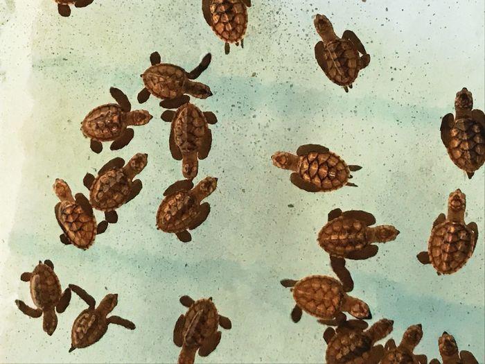 Baby turtles No People Indoors  Brown Water Close-up Animal Themes Animal Sea EyeEmNewHere Nature