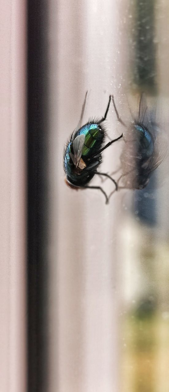 animal themes, invertebrate, insect, animal wildlife, animal, animals in the wild, one animal, close-up, no people, animal wing, day, selective focus, window, nature, fly, housefly, outdoors, focus on foreground, arthropod