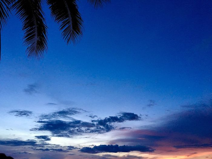 Nature Beauty In Nature Sky Palm Tree Cloud - Sky No People Bohol Blue