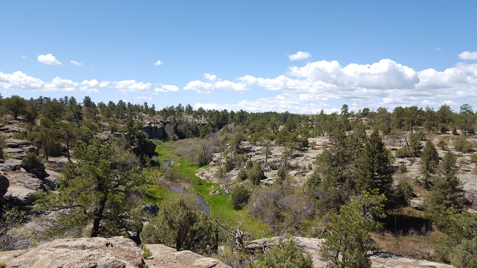 East Rim of Castlewood Canyon State Park Spring In Colorado Spring Wildflowers Stream Colorado