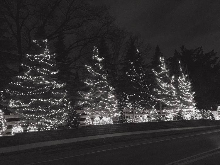 Christmas tree lights and the shadows Christmas Tree
