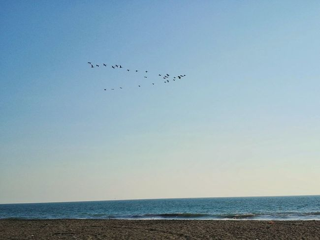 Free flight Sea Beach Flying Bird Water Nature Horizon Over Water Sky Outdoors Beauty In Nature Flock Of Birds No People Animal Wildlife Day Tranquility Animals In The Wild Scenics Animal Themes Summer Exploratorium