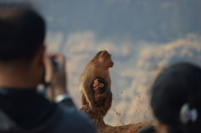 Domestic Animals Animal Themes One Animal Outdoors Close-up Friendship One Person DayIndiaclicks Salute India Everyplaceigobecomesmyworkplace Animal Family Animals In The Wild Monkey Young Animal Click Click 📷📷📷 Indian Indiapictures NikonD3300📷 No People Mountain Landscape Nature Fog Pet Portraits