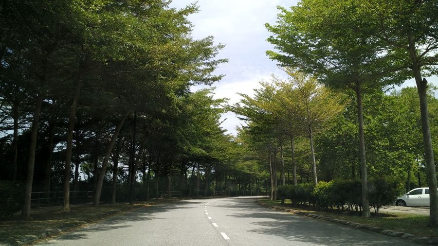 Sunny Beauty In Nature Day Diminishing Perspective Direction Forest Green Color Greens Growth Long Motor Vehicle Nature No People Noon Outdoor Photography Outdoors Plant Road Sky Street Symbol The Way Forward Tranquility Transportation Tree Treelined
