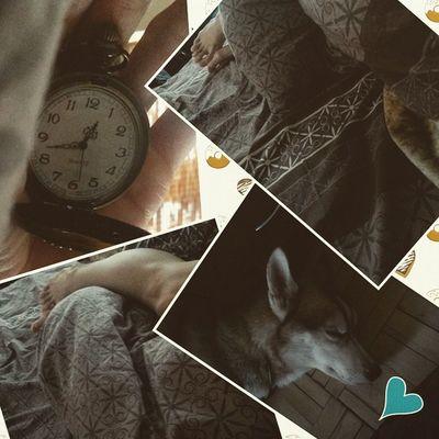 то чувство когда ты ещё в кроватке, а должен быть на работе..и всё благодаря собачке.. Фрейр кровать