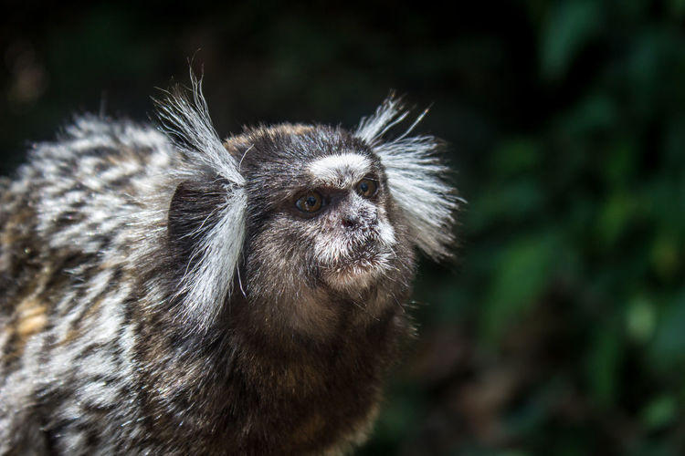Animal Hair Animal Nose Animals In The Wild Beauty In Nature Close-up Day Focus On Foreground Looking Mammal Monkey Nature No People One Animal Outdoors Selective Focus Whisker Wildlife Zoology