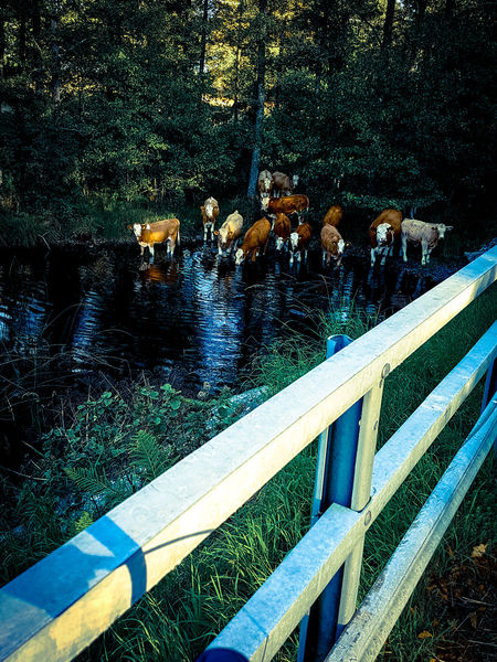 Farmer Water Outdoors Bridge Nature Tranquility Flowing Water Tranquil Scene Cowsofinstagram No People Atmosphere Moody Sky Dramatic Sky Atmospheric Mood Cloudy Cloud - Sky Weather Nautical Vessel Mode Of Transport Silhouette Street Light Illuminated Orange Color Cloud