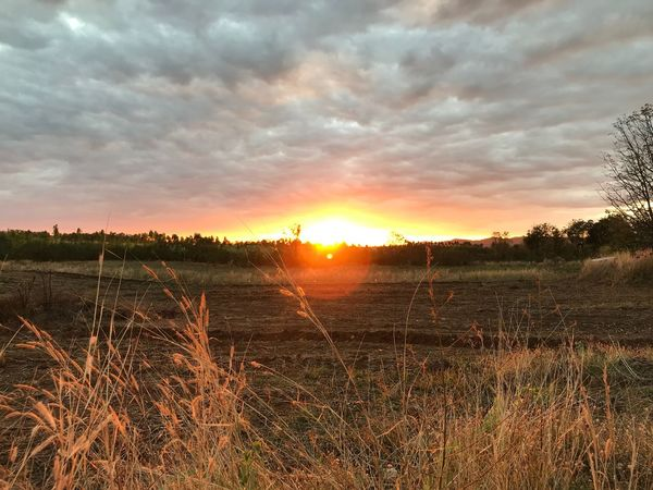Sunset at home Sunset Tranquil Scene Tranquility Field Nature Sun EyeEmNewHere Sky Sunlight Day Beauty In Nature Landscape