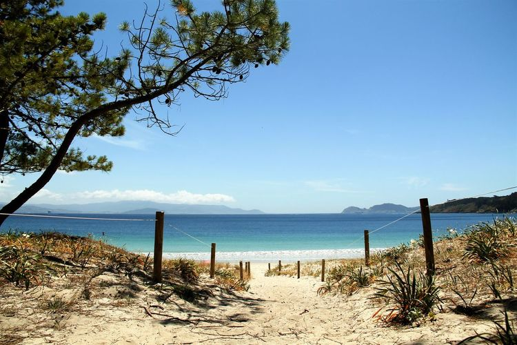 Beach Beauty In Nature Blue Calm Coastline Day Galicia, Spain Growth Horizon Over Water Idyllic Nature No People Outdoors Playa De Barra Scenics Sea Shore Sky Tourism Tranquil Scene Tranquility Travel Destinations Tree Vacations Water