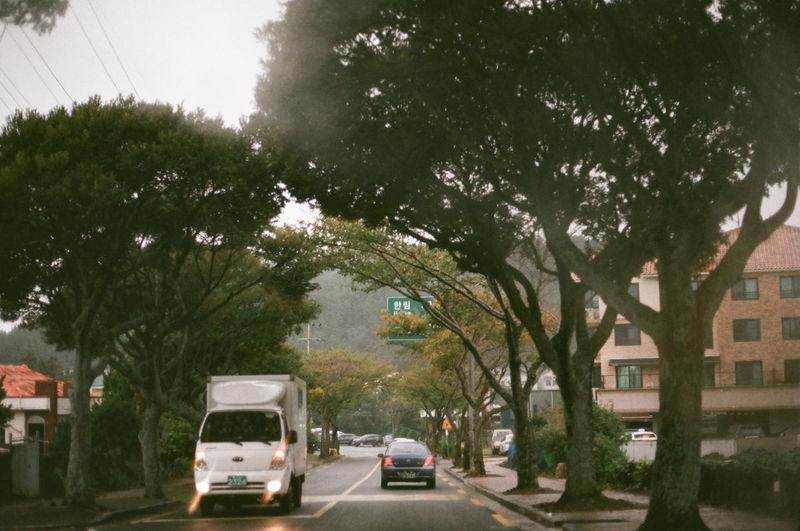 Rainny Jeju