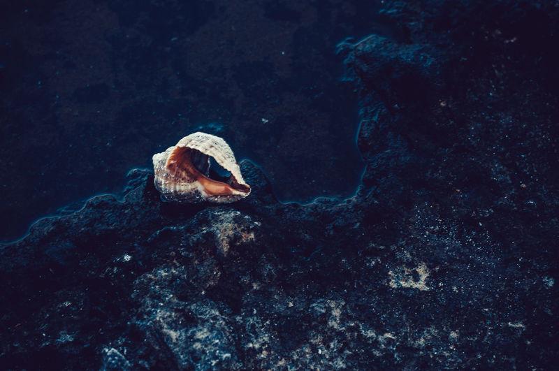 High angle view of seashell on rock