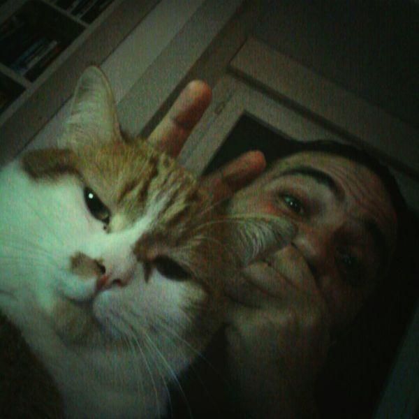 Cats Joke Hasenohren hahaha...