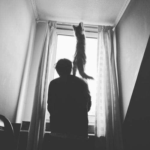 Window Rear View Indoors  Real People Curtain Day One Person Men Domestic Room Cat Pet Pets Cats Cat Lovers