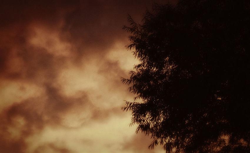 Dark Orange Sky Trees Nature Photography