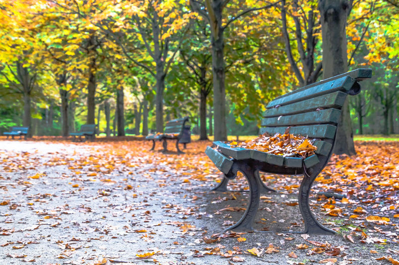 Autumn Colors Autumn Leaves Broadleaf Tree Park Bench Autumn Beauty In Nature Broadleaf Change Day Foliage Forest Greenary Leaf Nature No People Outdoors Park - Man Made Space Scenics Tree Perspectives On Nature