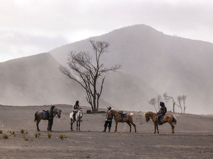 Horse Rider in Bromo. Mount Bromo (Indonesian: Gunung Bromo), is an active volcano and part of the Tengger massif, in East Java, Indonesia. At 2,329 metres (7,641 ft) it is not the highest peak of the massif, but is the most well known. The massif area is one of the most visited tourist attractions in East Java, Indonesia. INDONESIA Relaxing Vacations Bromo Color Image Day Desert Hill Horse Horseback Riding Men Mountain Nature Outdoors Sand Sky Storm Cloud Tourism Travel Destinations Tree