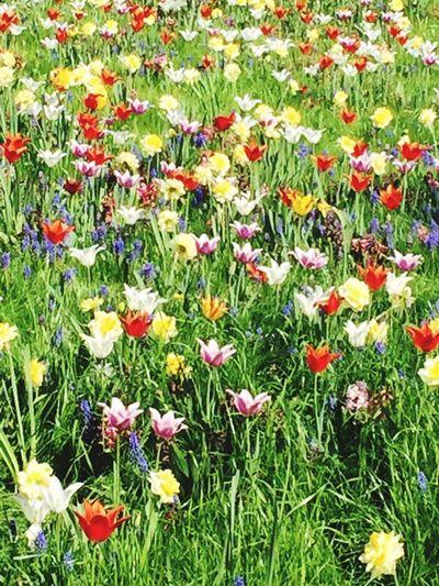 Blumenfeld Flower Flowering Plant Plant Beauty In Nature Freshness Growth Land