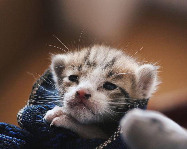 Close-Up Of Cute Kitten
